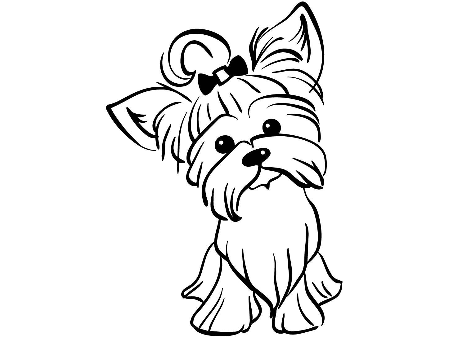1447x1088 Yorkshire Terrier