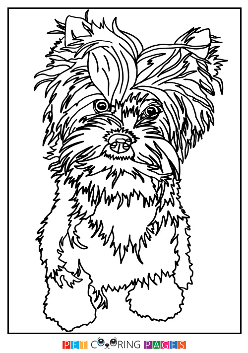 500x711 Yorkshire Terrier Coloring Page Charlie