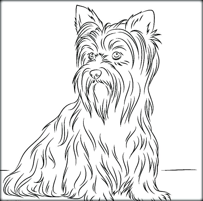 847x837 Yorkshire Terrier Coloring Pages Coloring Pages Book On Dog For S