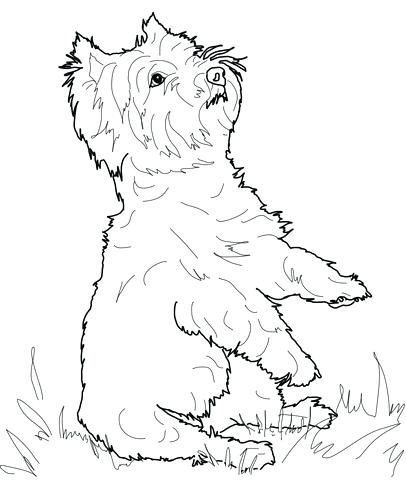 406x480 Yorkshire Terrier Coloring Pages Coloring Terrier Girl In Hat