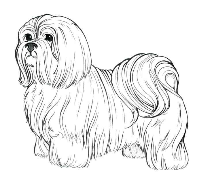 736x637 Yorkshire Terrier Coloring Pages Free Printable Coloring Pages