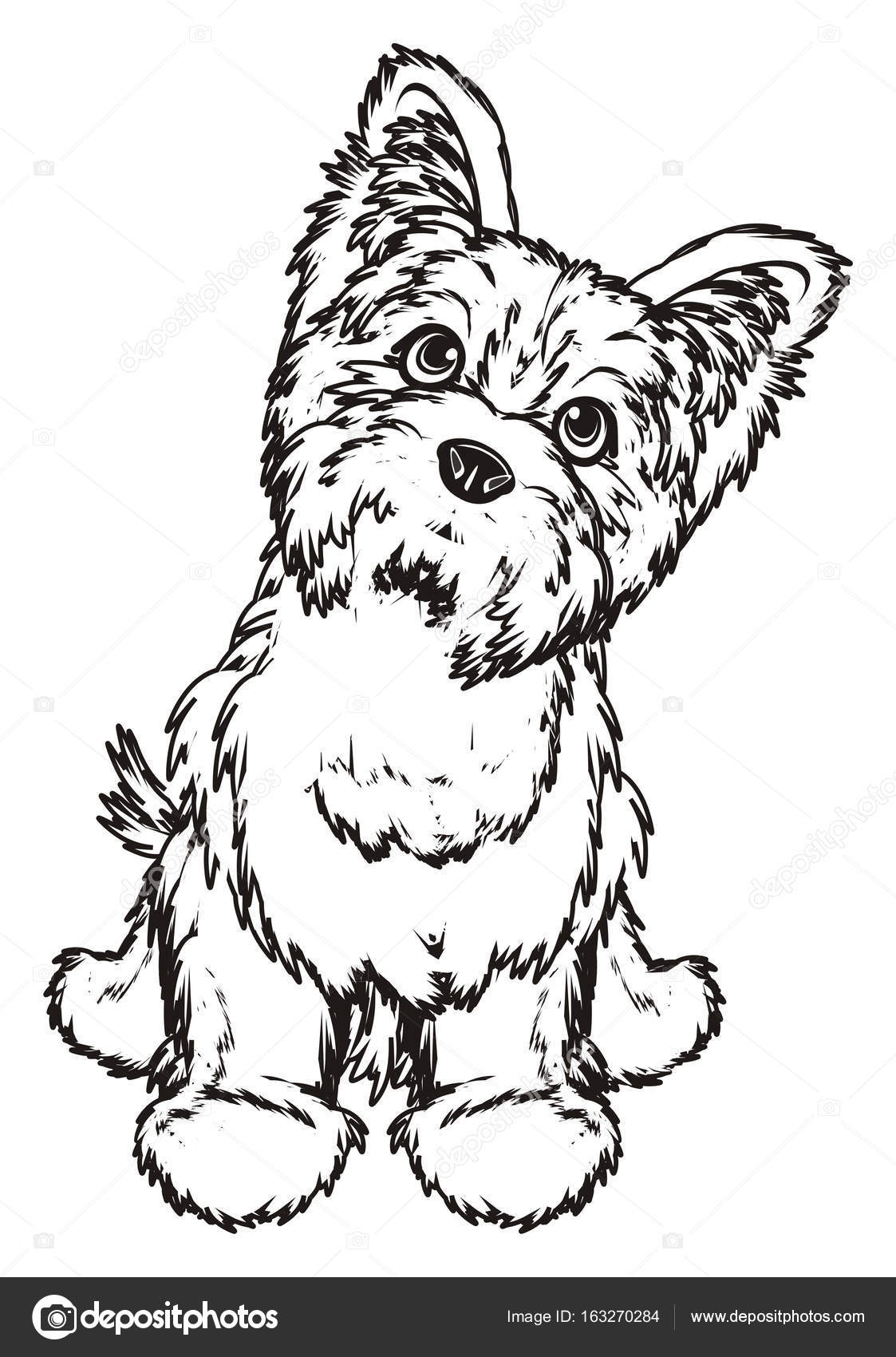 1123x1700 Coloring Yorkshire Terrier Stock Photo Tatty77tatty