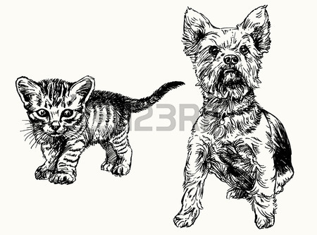 450x333 Hand Drawn Kitten And Yorkshire Terrier. Royalty Free Cliparts
