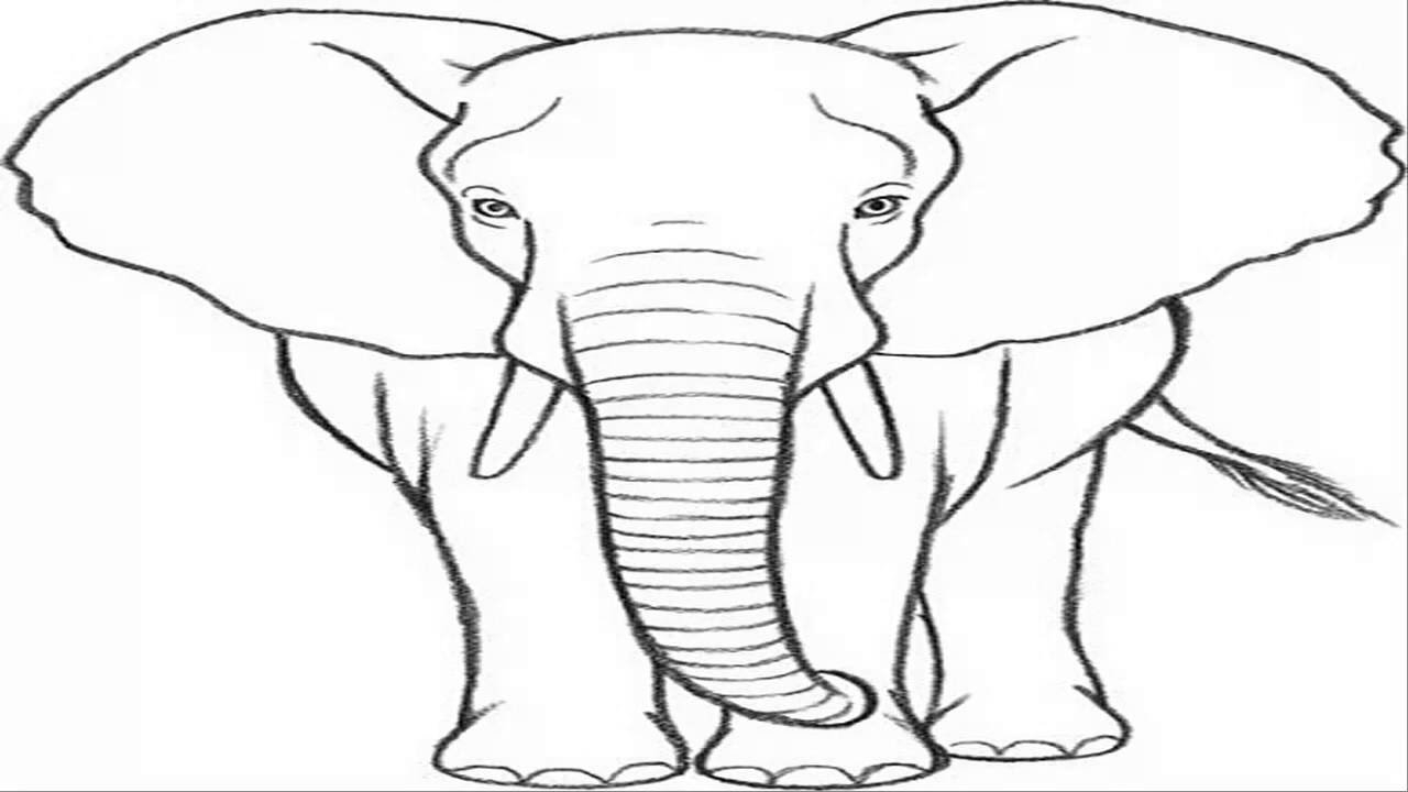 1280x720 Drawing Of An Elephant How To Draw Elephant Correctly In Photoshop