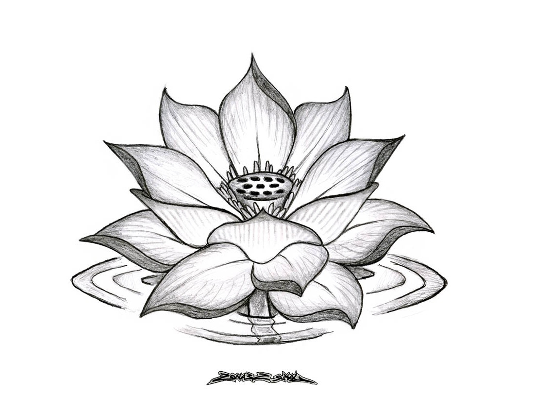 1100x850 Lotus Flower Pencil Drawing Drawing A Lotus Flower With Simple