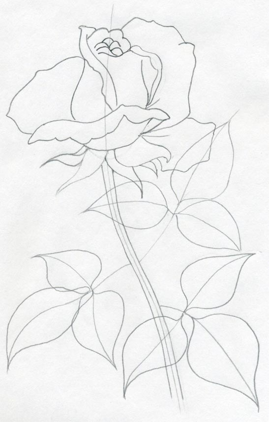 547x857 Drawing How To Draw A Realistic Rose Step By Step For Beginners