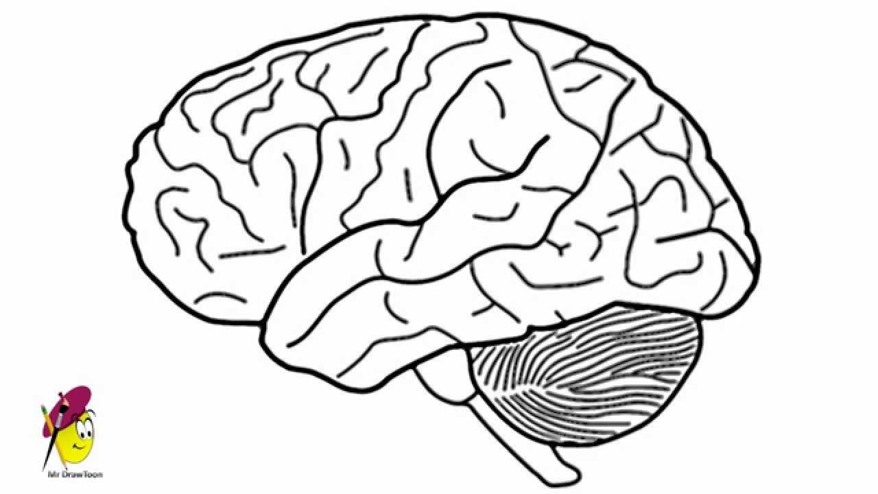1280x720 Simple Labeled Pencil Sketch Diagram Of Human Brain How To Draw