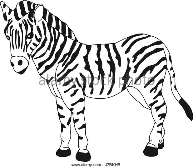 618x540 Zebra Cartoon Stock Photos Amp Zebra Cartoon Stock Images