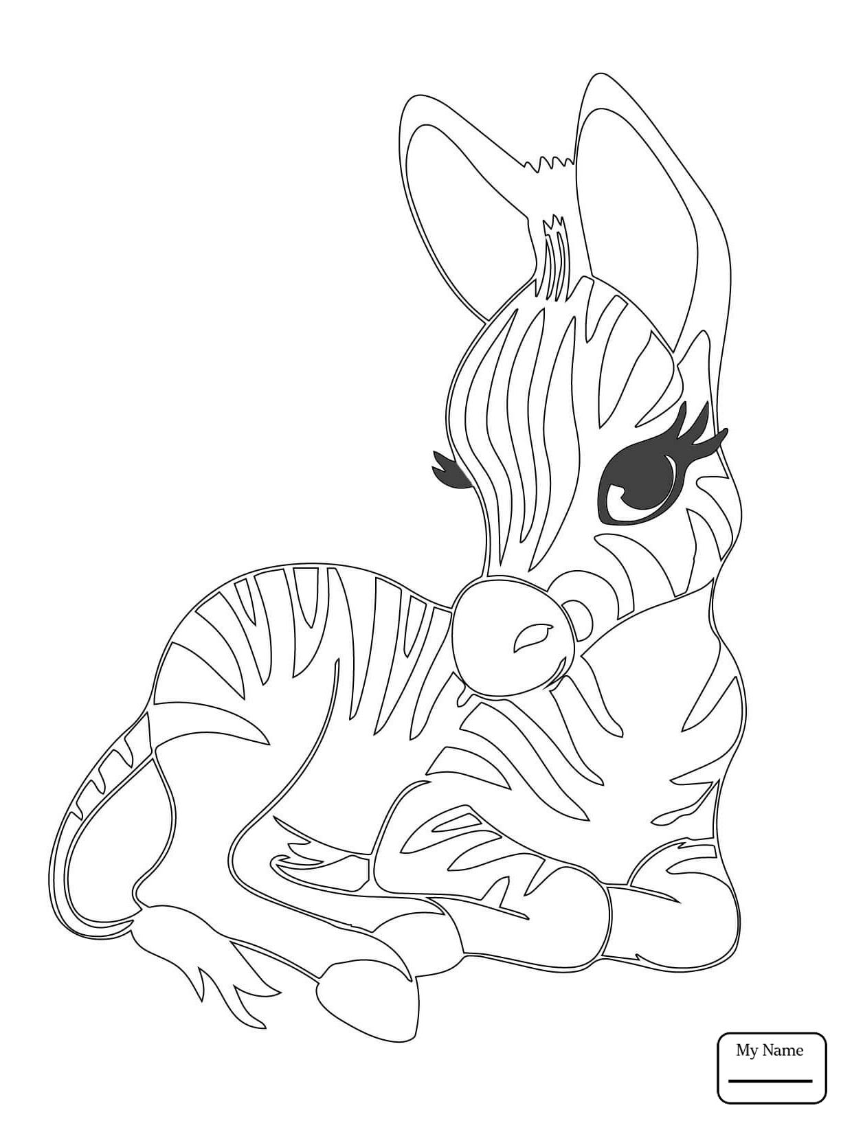 1224x1632 Zebras