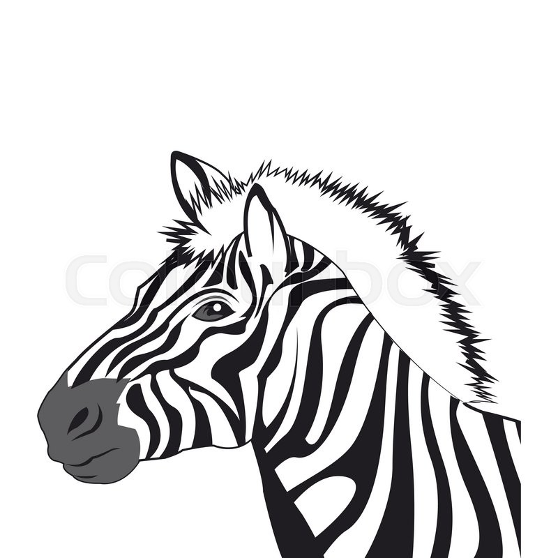 800x800 Flat design zebra drawing icon vector illustration Stock Vector