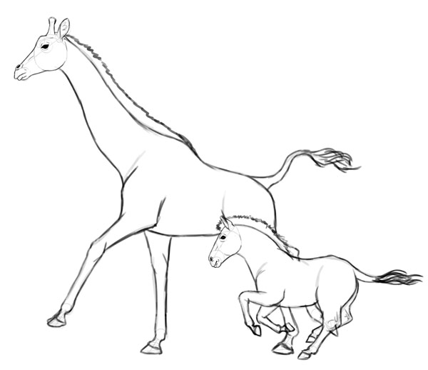 600x518 How to Draw Animals Zebras and Giraffes