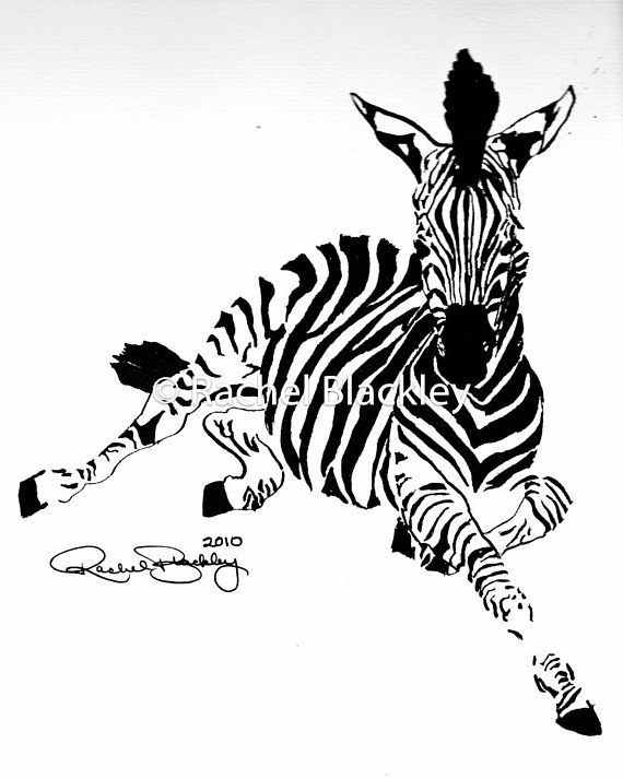 570x713 Young Zebra Ink Sketch Ink Drawing Pen and Ink Black and