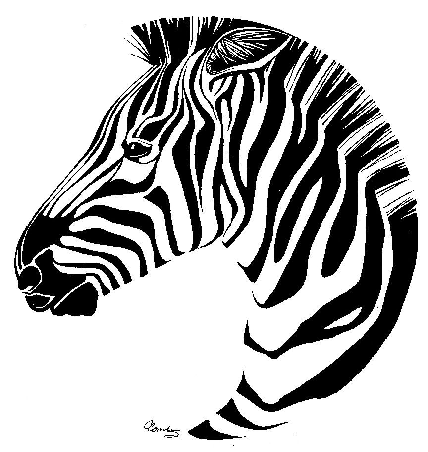 864x912 Zebra Drawing akvarell och konst Pinterest Drawing art and