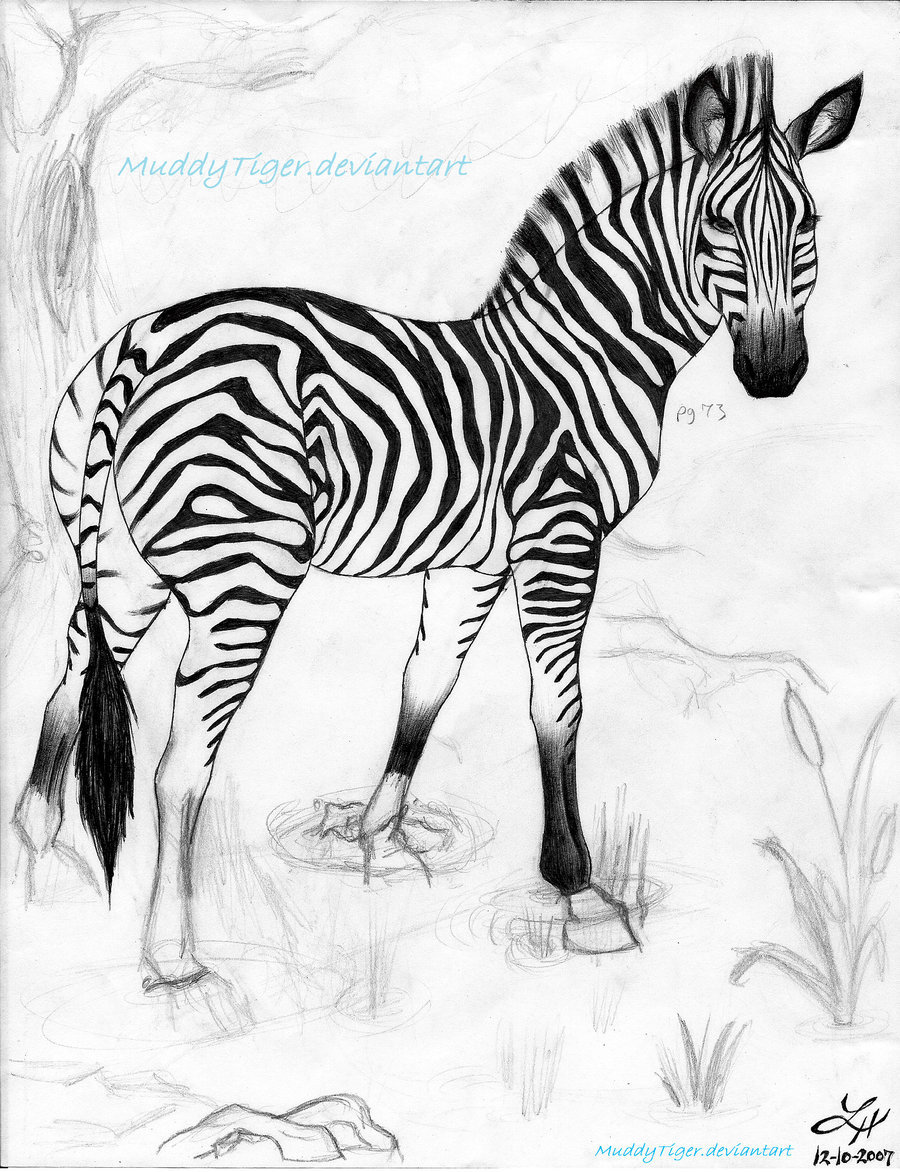 900x1172 Zebra by MuddyTiger on DeviantArt