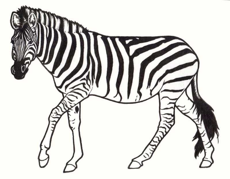 800x625 Zebra by ReQuay on DeviantArt