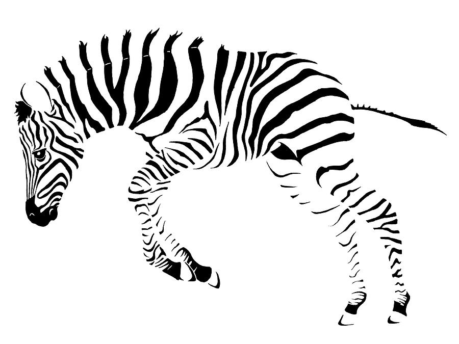 900x675 Baby Zebra Drawing by Nikola Marinkovic