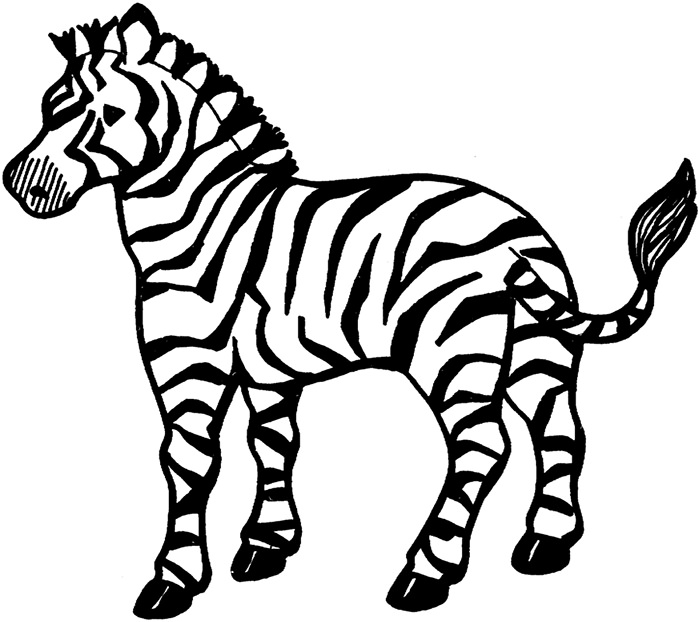 Zebra Drawing Easy