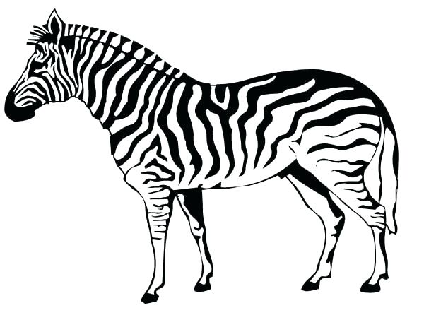 600x453 Zebra Print Coloring Pages Interesting Zebra Print Coloring Pages