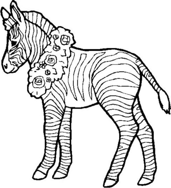 593x650 Zebra Coloring Pages 4 Nice Coloring Pages For Kids