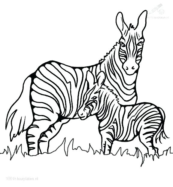 576x621 Beautiful Zebra Coloring Pages Print Excellent For Kids With Colo