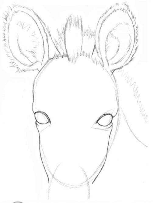 506x666 How To Draw Hair Of Animals A Pencil, A Zebra