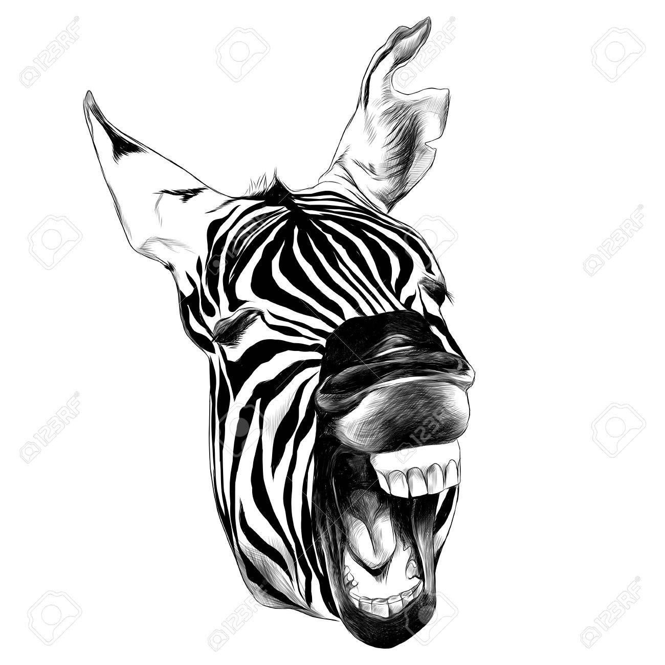 1300x1300 Zebra Head Contorts Face. Royalty Free Cliparts, Vectors,