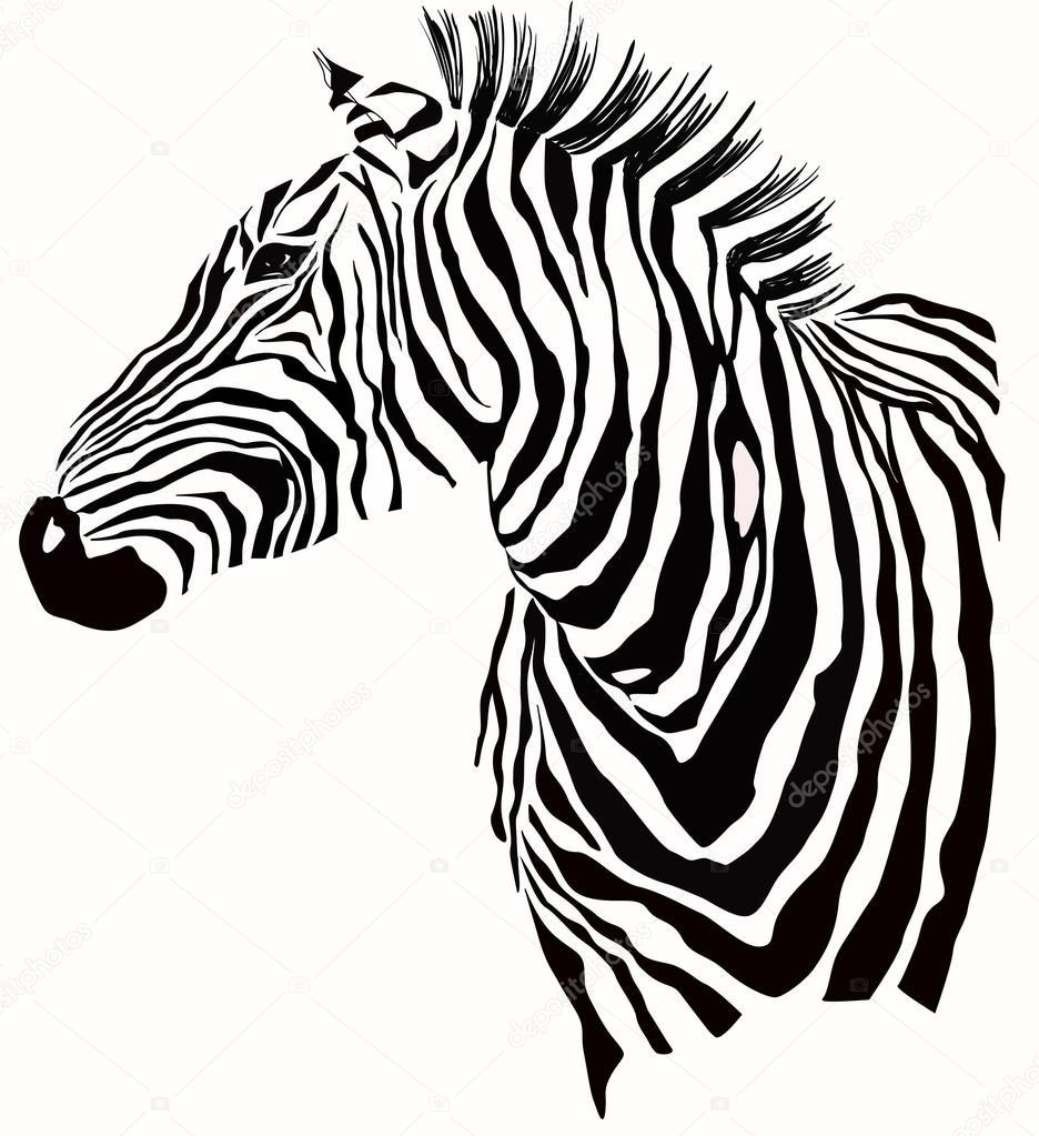 936x1023 Zebra Face Stock Vectors, Royalty Free Zebra Face Illustrations