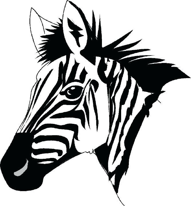 667x720 Zebras Color