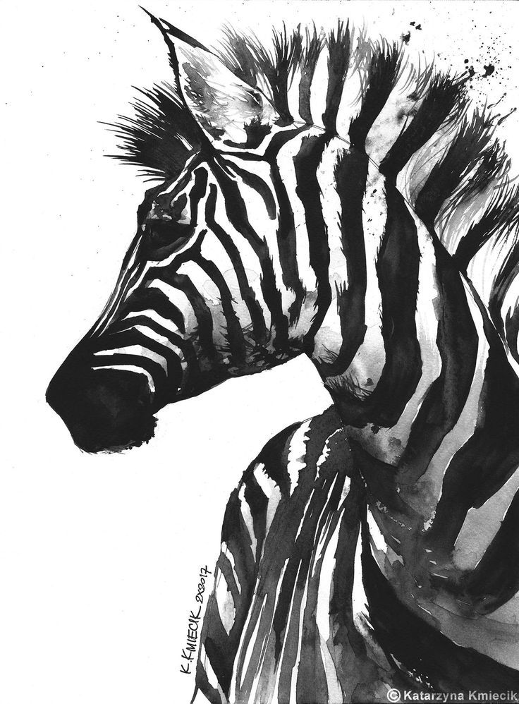 Zebra Head Drawing