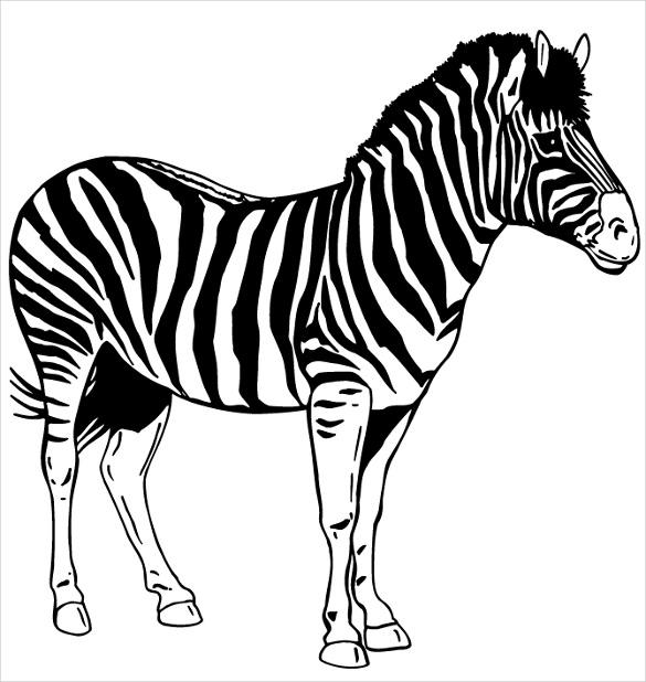 585x618 Drawn Zebra Stencil