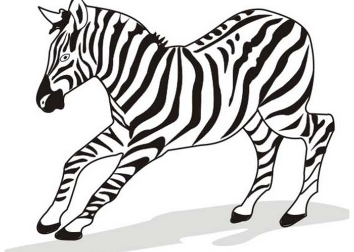 Zebra Line Drawing