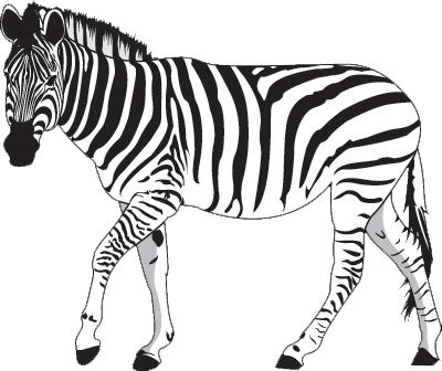 Zebra Line Drawing At Getdrawings Com