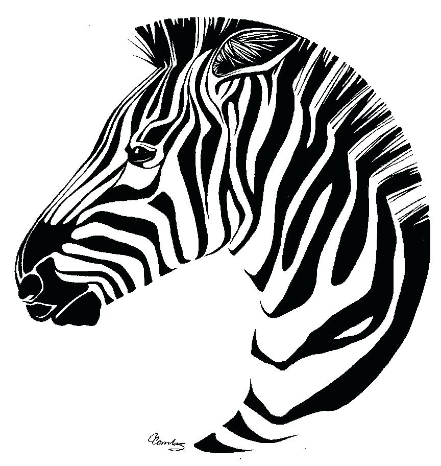 864x912 Coloring Coloring Pages Of Zebras Drawn Zebra Line Drawing 4