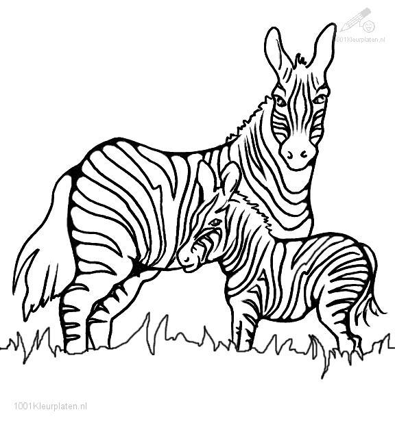 576x621 Printable Coloring Pages Zebra Drawing Zebra 59