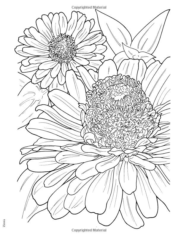 Zinnia Flower Drawing