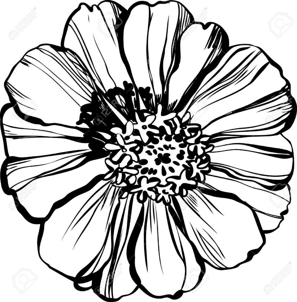 Zinnia Flower Drawing at GetDrawings | Free download