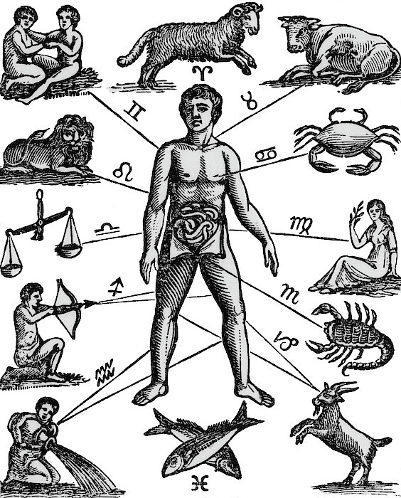 564x700 Zodiac Man Drawing Relating Astrology Painting By Vintage Images