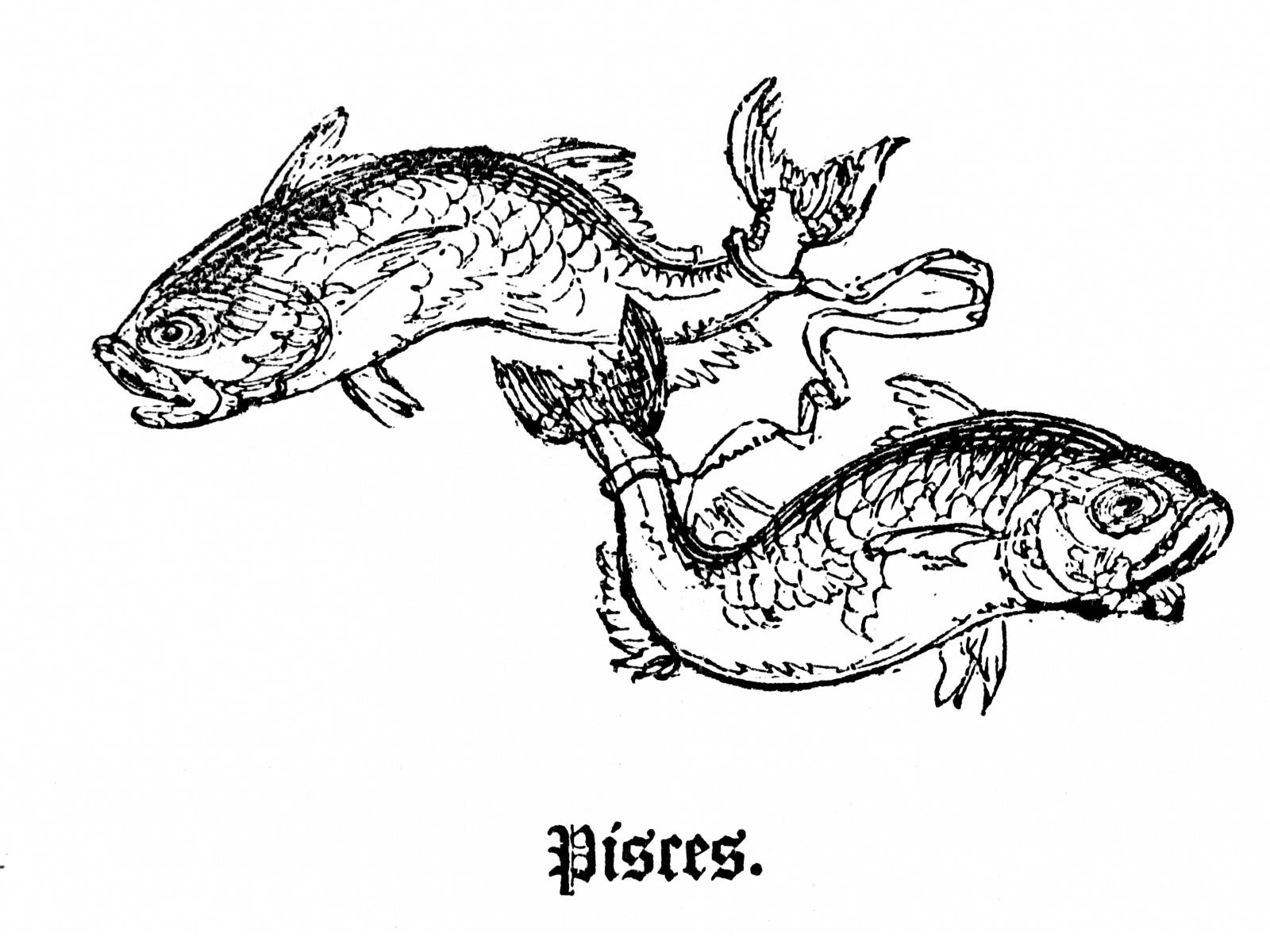 1600x1200 Filepisces Drawing.jpg