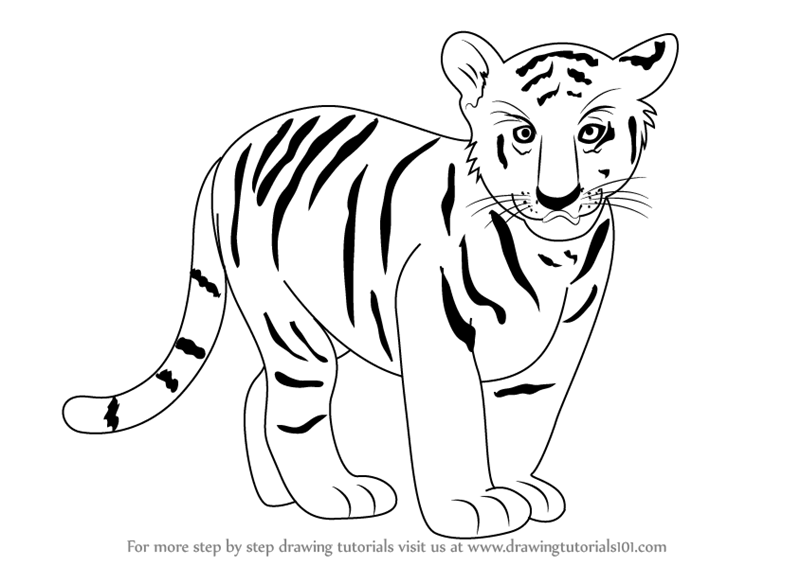 800x566 Learn How To Draw Tiger Cub (Zoo Animals) Step By Step Drawing