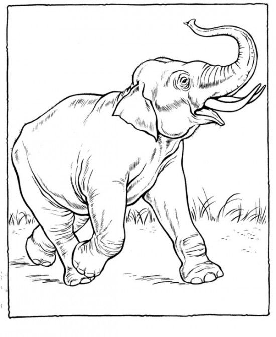 550x672 The Best Zoo Animal Coloring Pages Ideas On Zoo