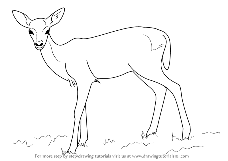 800x566 Learn How To Draw A Baby Deer Aka Fawn (Zoo Animals) Step By Step