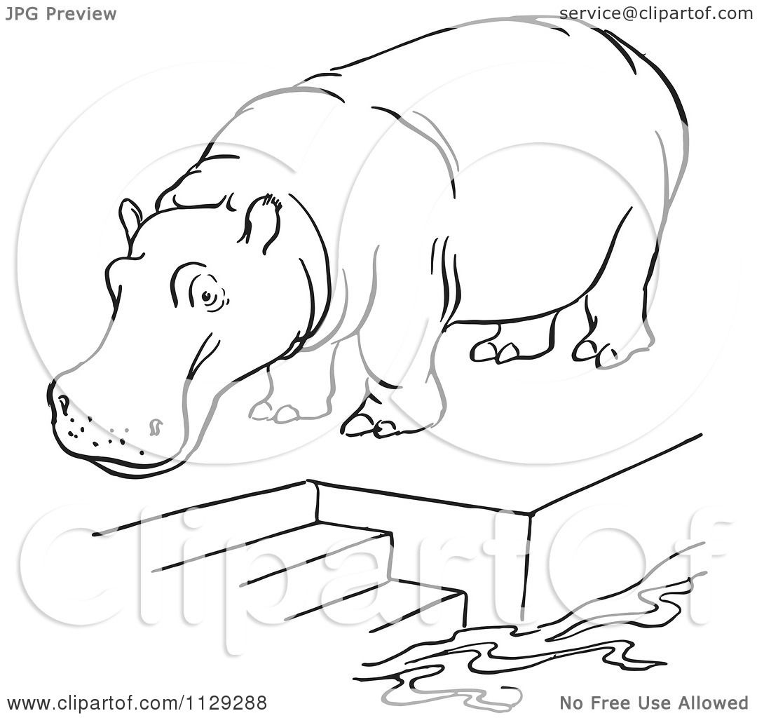 1080x1024 Cartoon Clipart Of An Outlined Zoo Hippo On A Pool Platform