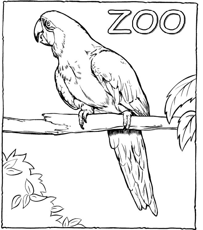 Zoo Drawing