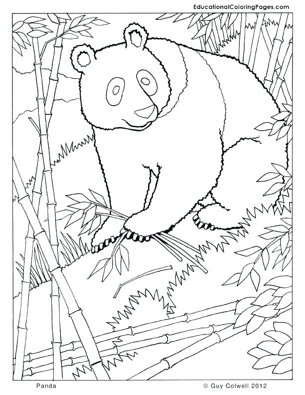 612x792 Fresh Panda Coloring Page Kids Pages Together With Zoo Anim