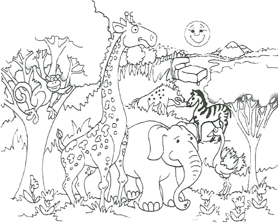 970x780 Zoo Animals Coloring Pictures Large Size Of Zoo Animals Coloring