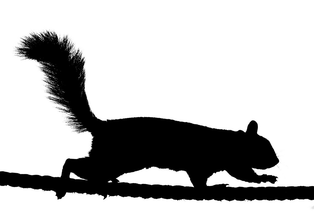 1024x721 Squirrel Silhouette 3 Kintired