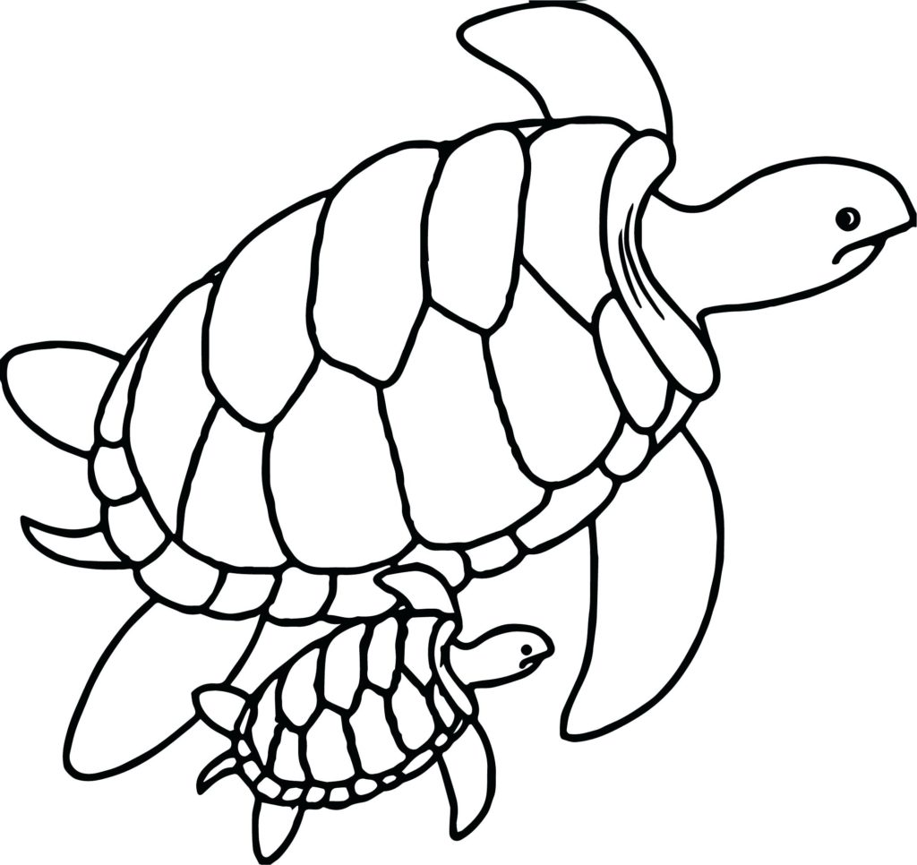 1024x966 Growth Outline Of Turtle Sea Icon Summer Vacation Royalty Free