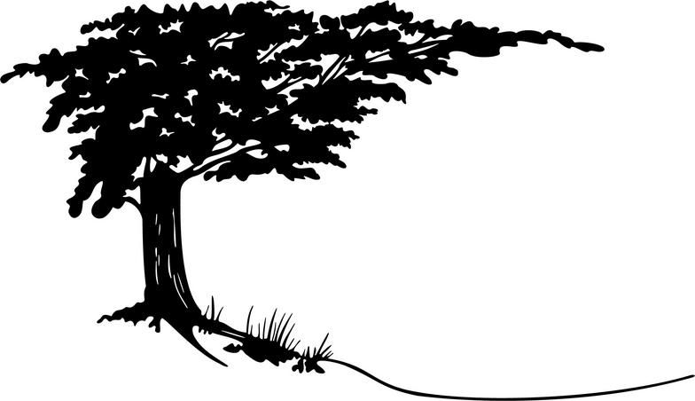 784x452 Cypress Tree Clipart Amp Cypress Tree Clip Art Images