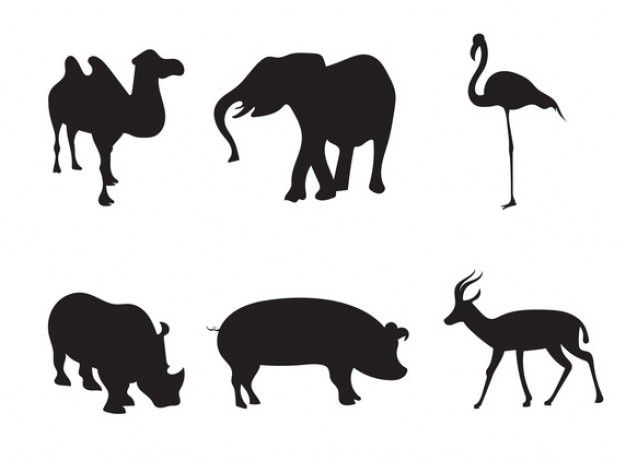 626x461 Camel Vectors, Photos And Psd Files Free Download Animal