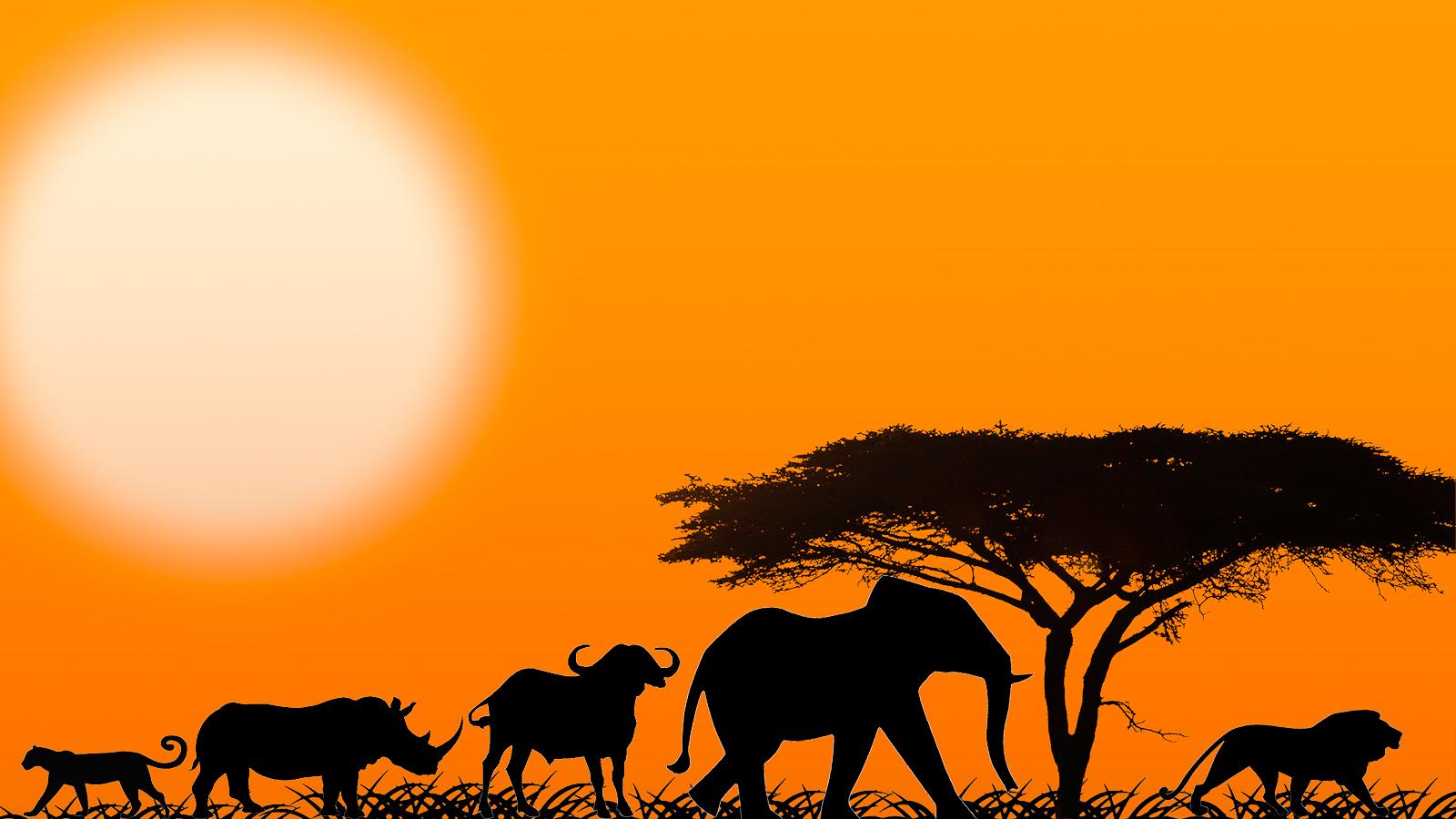 1600x900 Spotting Africa's Big 5 In Tanzania Mowgli Adventures